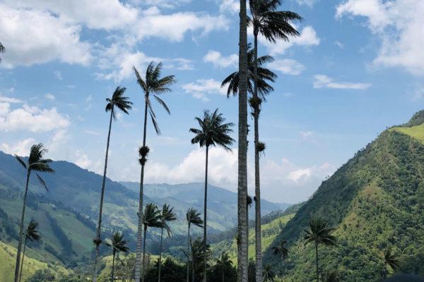 Travel-Designer-Reisverhalen-Colombia-Grootste-Palmboom-Ter-Wereld